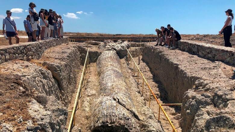 Μυτιλήνη: Τι μαρτυρούν οι περίπου 50 απολιθωμένοι κορμοί δέντρων που βρέθηκαν στις νέες ανασκαφές