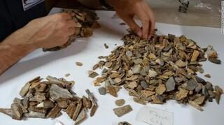 Σκελετός Νεάτερνταλ κοριτσιού 41.000 ετών λύνει το μυστήριο των αρχαιολόγων