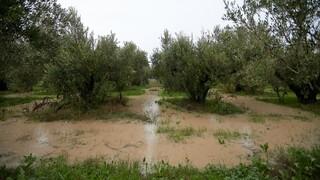 Μικροπροβλήματα από τις βροχές στην Κεντρική Μακεδονία - Χιόνια το βράδυ της Πέμπτης