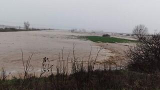 Κακοκαιρία: 30.000 στρέμματα πλημμυρισμένα και 1.500 αιγοπρόβατα νεκρά στη Ροδόπη