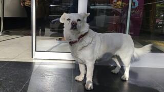 Τουρκία: Σκύλος περίμενε επί μέρες τον ιδιοκτήτη του έξω από νοσοκομείο