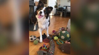 Μελέτη: Ποιοι σκύλοι μπορούν να μάθουν νέες λέξεις αν τις ακούσουν τέσσερις φορές