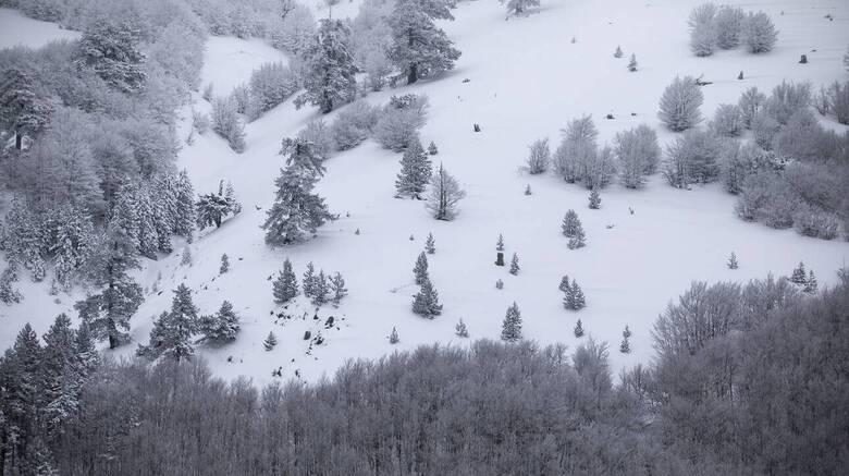 Ελβετία: Καταπλακώθηκαν από χιονοστιβάδα αλλά σώθηκαν χάρη στους σκύλους τους