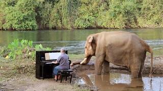 Πολ Μπάρτον: Ο Βρετανός μουσικός παίζει πιάνο σε ελέφαντες που σώθηκαν από την αιχμαλωσία