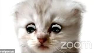 «Δεν είμαι γάτα»: Δικηγόρος ενεργοποιεί λάθος φίλτρο στο Zoom και «ρίχνει» το Διαδίκτυο