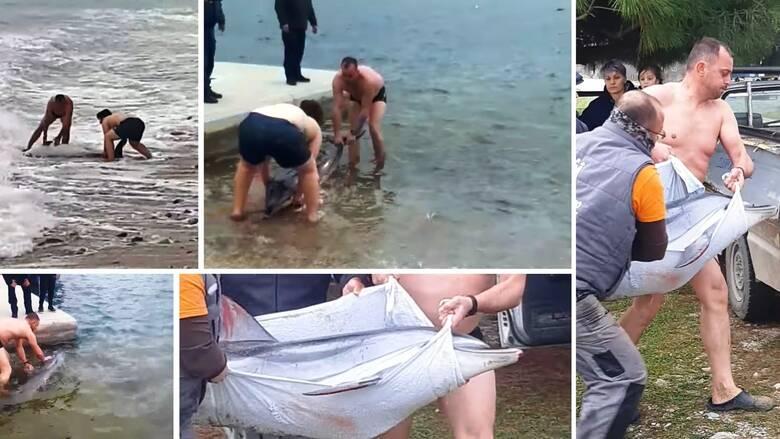 Καβάλα: Συγκινητική επιχείρηση διάσωσης δελφινιού σε παραλία του δήμου Παγγαίου