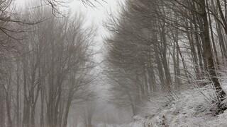 Κακοκαιρία «Μήδεια»: Πυκνό χιόνι στον Βόλο- Στα λευκά το Πήλιο