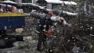 Κακοκαιρία «Μήδεια»: 1.490 κλήσεις στην Πυροσβεστική, οι περισσότερες για δέντρα που έπεσαν