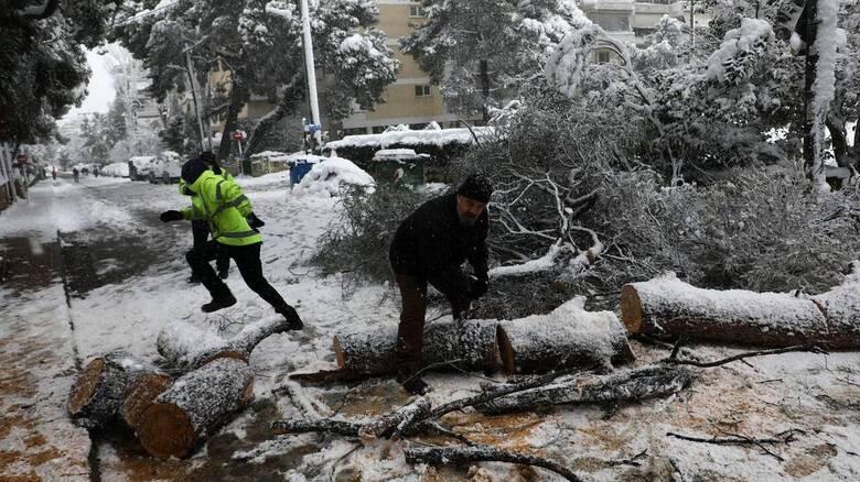Νεκρός 71χρονος στην Εύβοια από δένδρο που τον καταπλάκωσε
