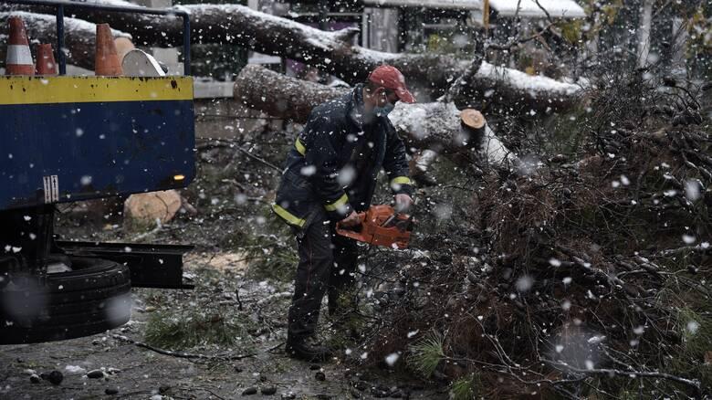 Κακοκαιρία «Μήδεια» - ΚΕΔΕ: Δεν είναι ευθύνη των δήμων το κόψιμο των δέντρων