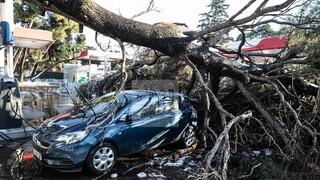 Κακοκαιρία «Μήδεια»: Αγώνας δρόμου για την ηλεκτροδότηση - Αντιπαράθεση για τις ευθύνες