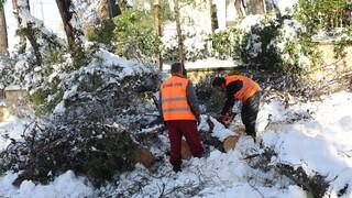 ΚΕΔΕ: Καμία δημοτική ευθύνη για το κλάδεμα δέντρων κατά μήκος των γραμμών μεταφοράς ενέργειας