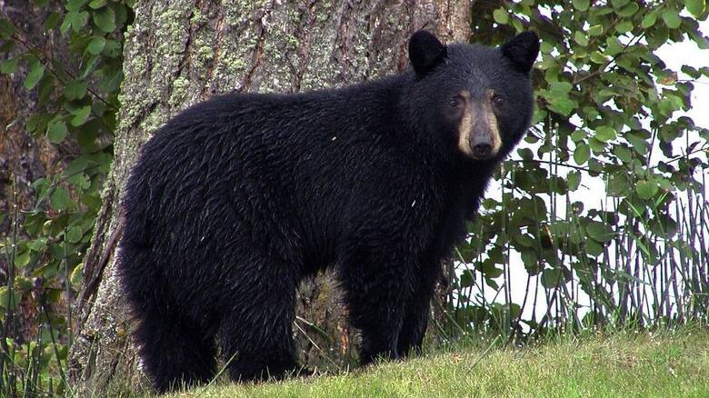 Τρόμος για γυναίκα στην Αλάσκα: Της επιτέθηκε αρκούδα ενώ ήταν στην τουαλέτα