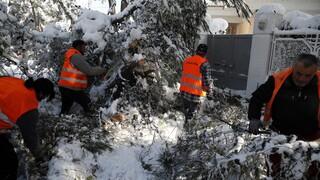 Κακοκαιρία «Μήδεια»: Πώς εξηγεί το meteo την πτώση τόσων δέντρων
