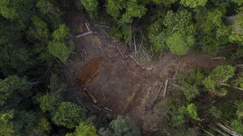 Ο Αμαζόνιος στις «μικρές αγγελίες»: Παράνομη πώληση οικοπέδων μέσω Facebook