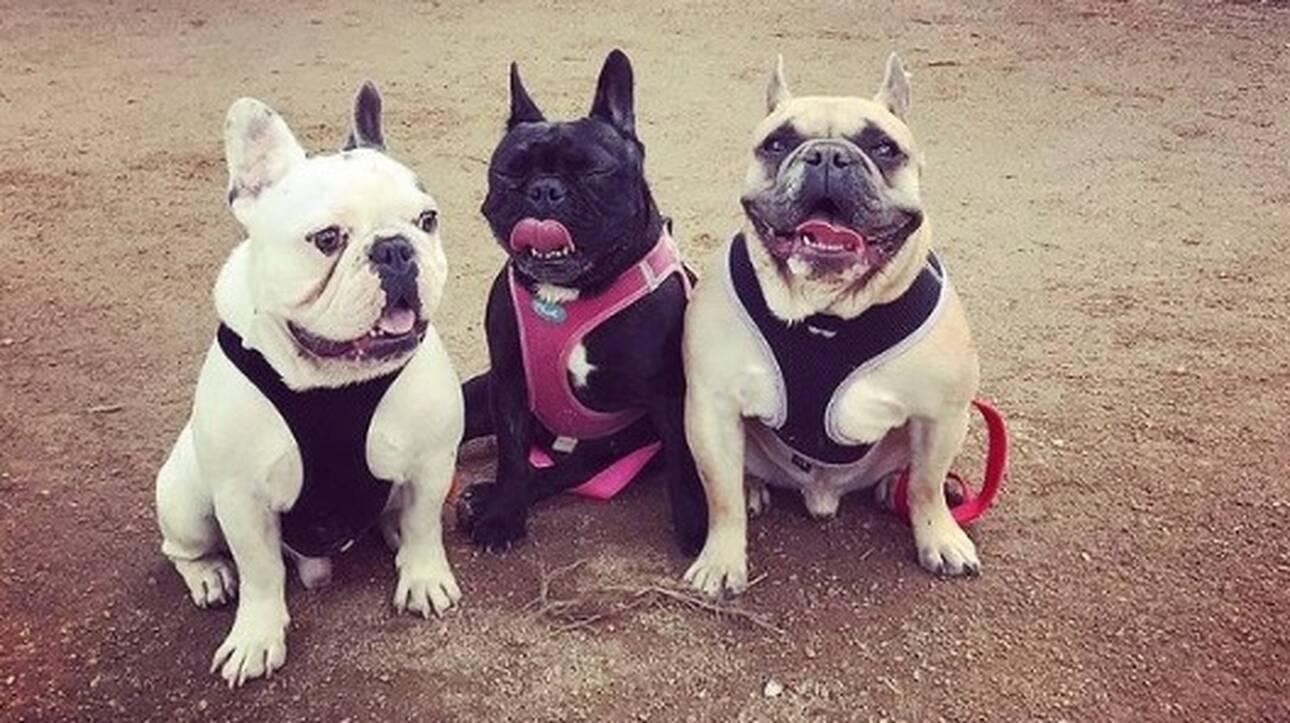 Lady Gaga: Βρέθηκαν τα σκυλάκια της - Προσέφερε αμοιβή ύψους 500.000 δολαρίων