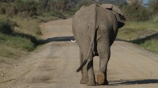 Ισπανία: Νεκρός εργαζόμενος ζωολογικού κήπου μετά από χτύπημα ελέφαντα