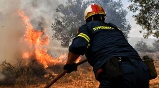Υπό έλεγχο τέθηκε η δασική πυρκαγιά στον Κάλαμο Ωρωπού