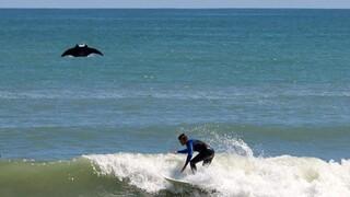Σπάνιο γιγάντιο σαλάχι εμφανίστηκε στη Φλόριντα χαρίζοντας μια εντυπωσιακή φωτογραφία