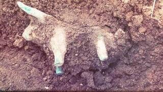 Τυχαία ανακάλυψη στην Αρχαία Ολυμπία: Στο φως χάλκινο ειδώλιο ταύρου