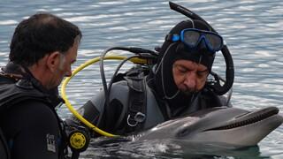 Θλίψη για νεκρό δελφίνι στο Λουτράκι: Μπλέχτηκε στα δίχτυα ψαράδων