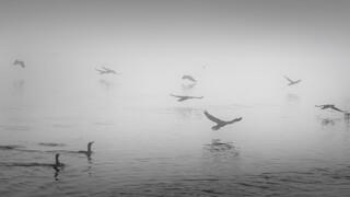 Γρίπη των πτηνών: Νεκρός πελακάνος στη λίμνη Καστοριάς - Σε επιφυλακή η Δυτική Μακεδονία