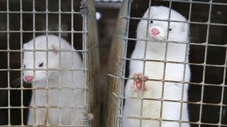 Έρευνα αποκαλύπτει ποια ζώα μεταφέρουν ιούς στον άνθρωπο