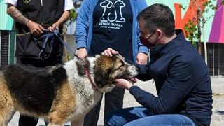 «Το καταφύγιο του Σωκράτη»: Το πρώτο σύγχρονο καταφύγιο αδέσποτων ζώων στο δήμο Αθηναίων