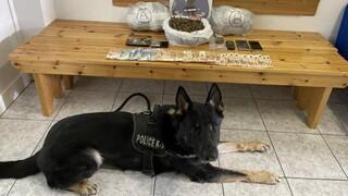 Θεσσαλονίκη: Ο αστυνομικός σκύλος Ακύλας «μυρίστηκε» την κάνναβη που έκρυβε 29χρονος στο σπίτι