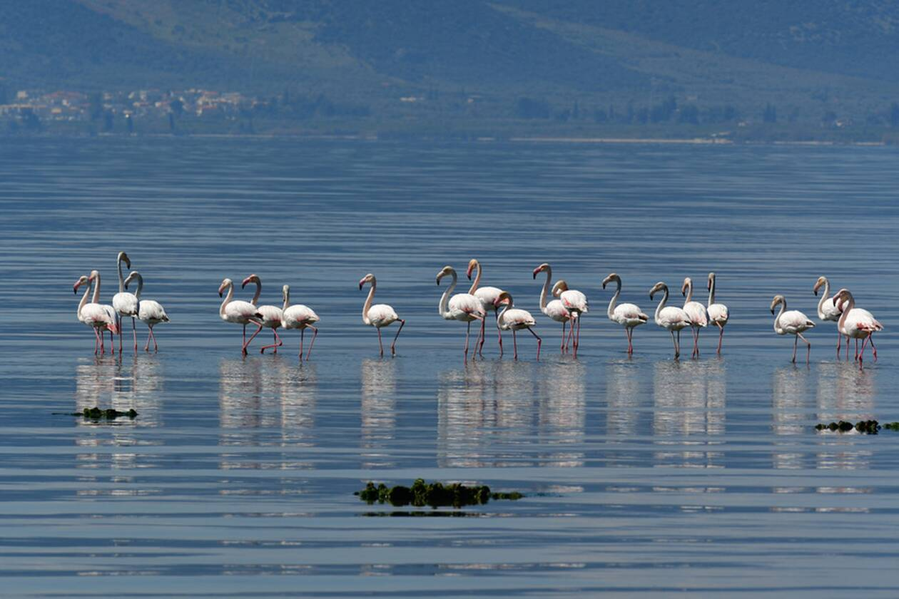 https://cdn.cnngreece.gr/media/news/2021/04/03/260729/photos/snapshot/flamingo.jpg