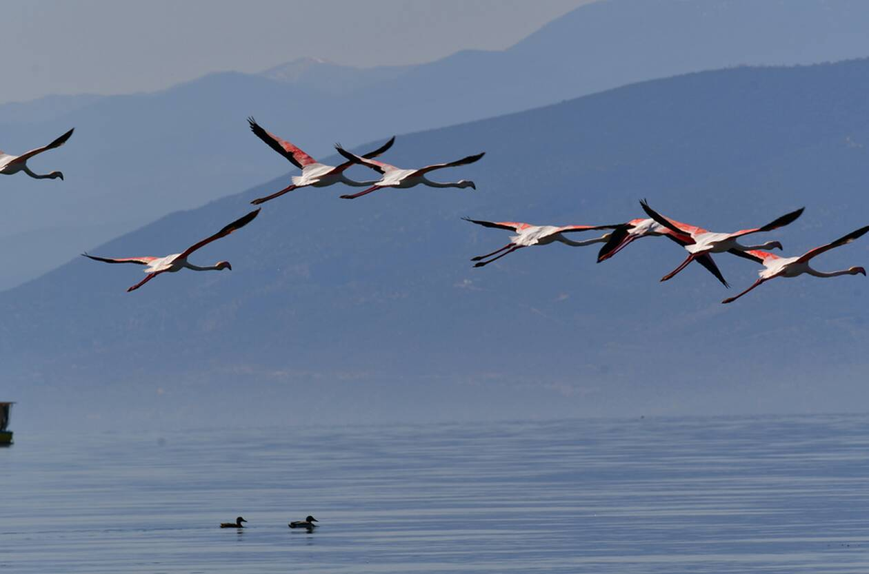 https://cdn.cnngreece.gr/media/news/2021/04/03/260729/photos/snapshot/flamingo1.jpg