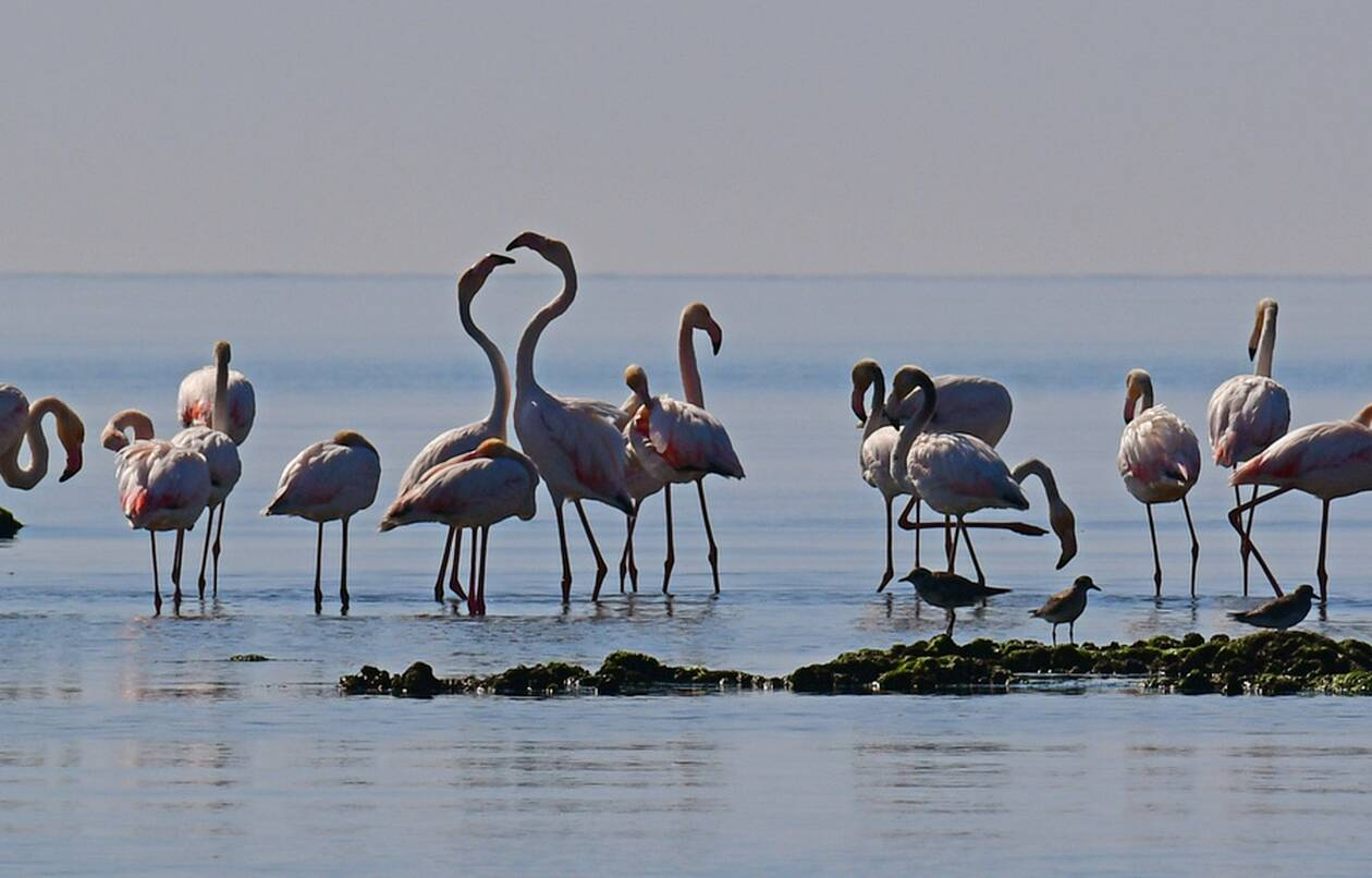 https://cdn.cnngreece.gr/media/news/2021/04/03/260729/photos/snapshot/flamingo2.jpg