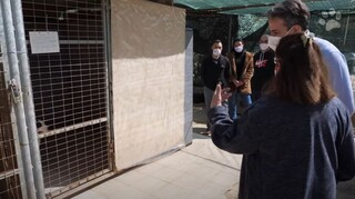 Παγκόσμια Ημέρα Αδέσποτων: Επίσκεψη Μητσοτάκη σε καταφύγιο εγκαταλελειμμένων ζώων στην Ηλιούπολη