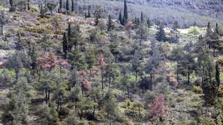 Δασικοί χάρτες: Παράταση έξι μηνών στη διαδικασία υποβολής αντιρρήσεων