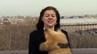 Σκύλος «έκλεψε» το μικρόφωνο ρεπόρτερ σε ζωντανή μετάδοση και… έλιωσε τις καρδιές των τηλεθεατών