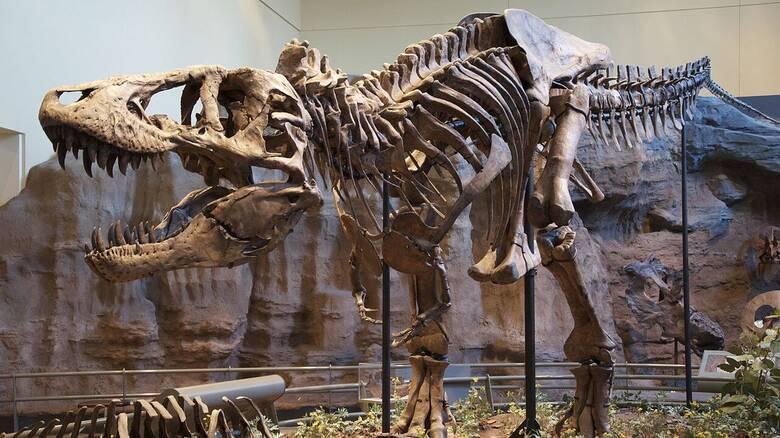 Νέες ενδείξεις: Ομαδική υπόθεση για τους τυραννόσαυρους το κυνήγι της τροφή