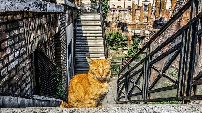 Area Sacra: Ρωμαϊκά απομεινάρια, αρχαίοι θεοί και γάτες
