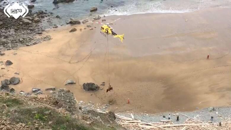 Ισπανία: Εντυπωσιακή διάσωση ταύρου 800 κιλών με ελικόπτερο