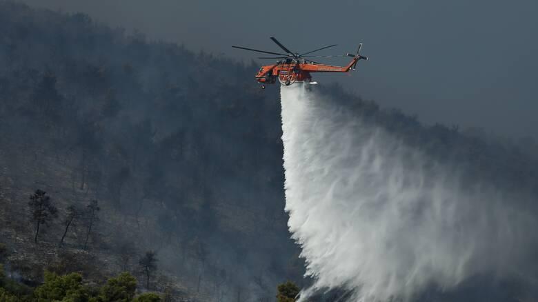 Μαίνεται πυρκαγιά σε αναγεννημένο δάσος στη Σμέρνα Ηλείας