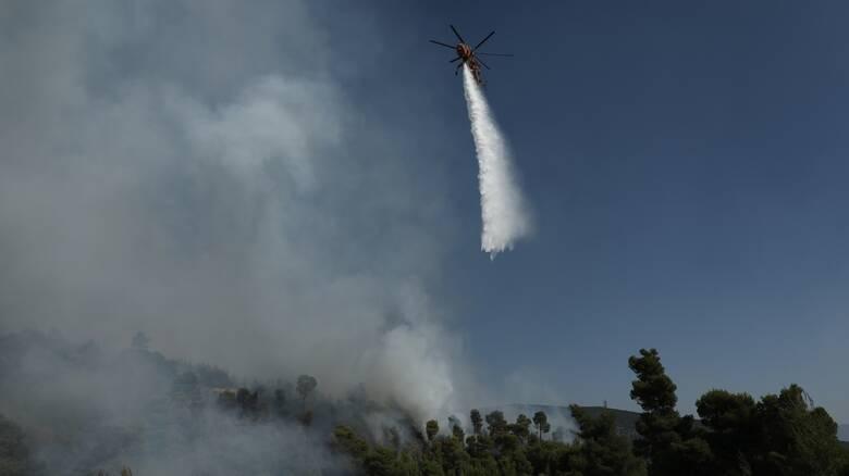 Στάχτη 100 στρέμματα από τη φωτιά στο αναγεννημένο δάσος στη Σμέρνα Ηλείας - Η πιθανότερη αιτία