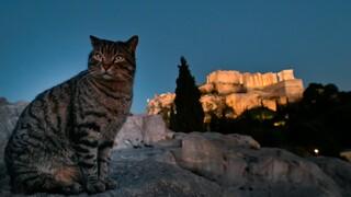 Μέγαρο Μαξίμου: Στο υπουργείο Εσωτερικών η αρμοδιότητα για τα ζώα συντροφιάς