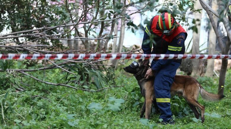 Ιωάννινα: Αγνοείται 70χρονη – Και ειδικά εκπαιδευμένος σκύλος στις έρευνες