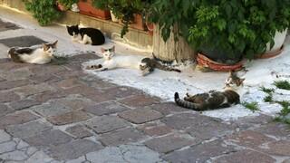 Ζώα συντροφιάς: Στο υπουργείο Εσωτερικών οι υπηρεσίες και οι αρμοδιότητες