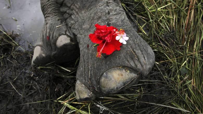 Ινδία: Μυστήριο με τον θάνατο 18 άγριων ελεφάντων