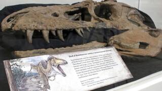 Tlatolophus Galorum: Νέο είδος δεινοσαύρου αναγνώρισαν παλαιοντολόγοι στο Μεξικό