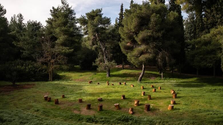 Βοτανικός Κήπος: Ένα κομμάτι του Παραδείσου που έπεσε στην Αττική