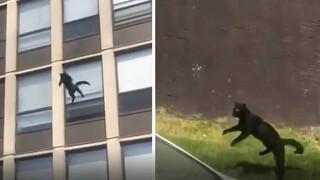Είναι όντως εφτάψυχες: Γάτα πηδάει από τον 5ο όροφο φλεγόμενου κτηρίου