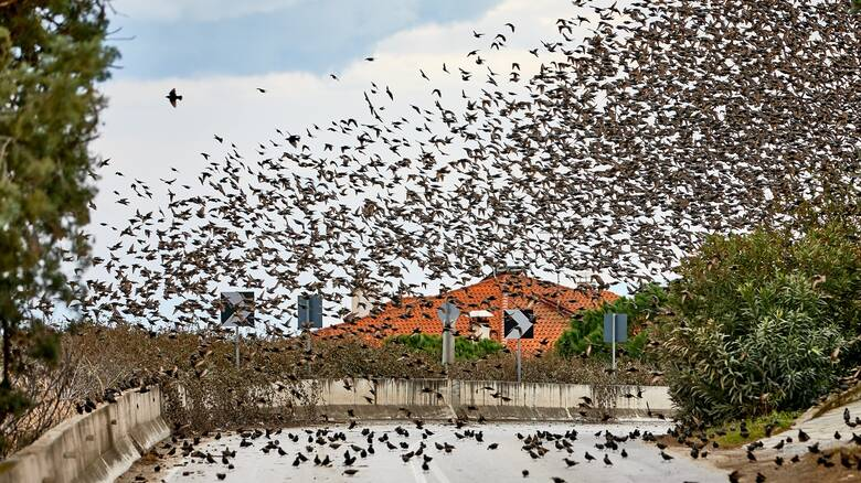 'Ερευνα: 50 δισ. πουλιά στη Γη – Ποιο είδος είναι το πολυπληθέστερο