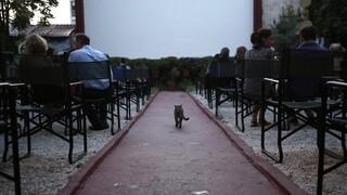 Η Θεσσαλονίκη ετοιμάζεται για ένα οσκαρικό κινηματογραφικό καλοκαίρι