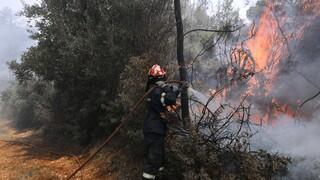 Πυρκαγιά σε δασική έκταση στην περιοχή Αγνάντιο Βοιωτίας